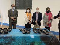 reperti archeologici del relitto capistello riportati in sicilia